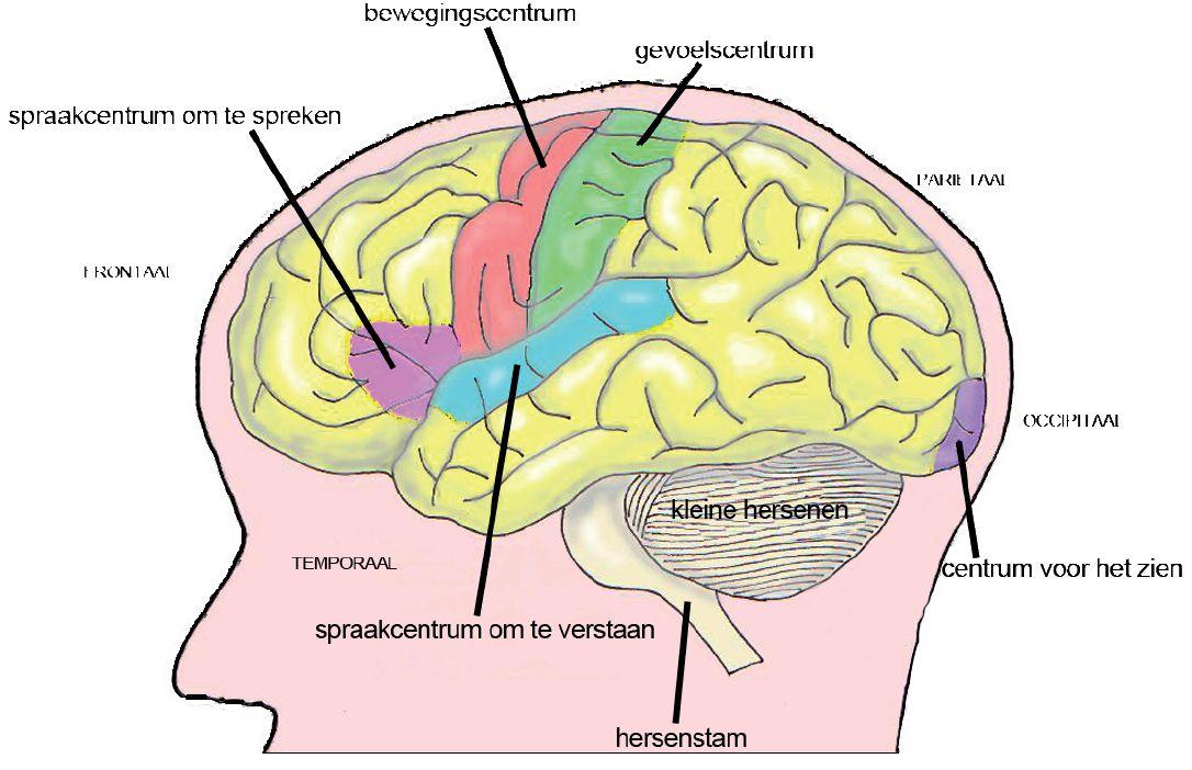 Hersentumoren Pid H2 Hersentumoren En Onderzoek